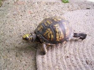 Turtle 2 003