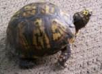 Turtle 2 008