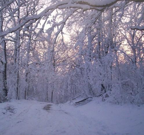 blizzard day 4 051
